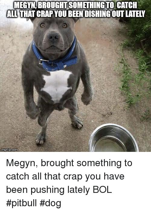 humorous pitbull memes