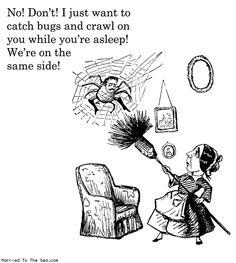 humorous spider memes
