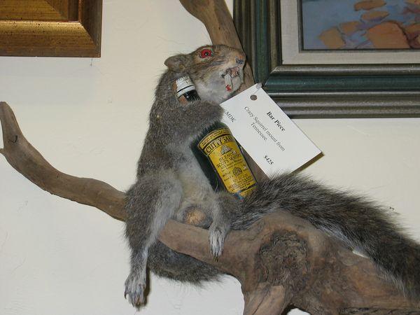 humorous squirrel meme
