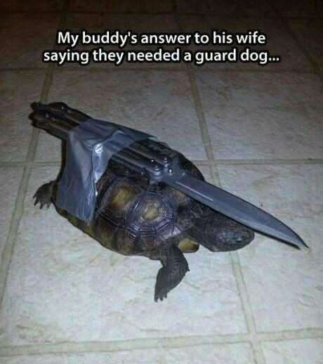 humorous turtle meme