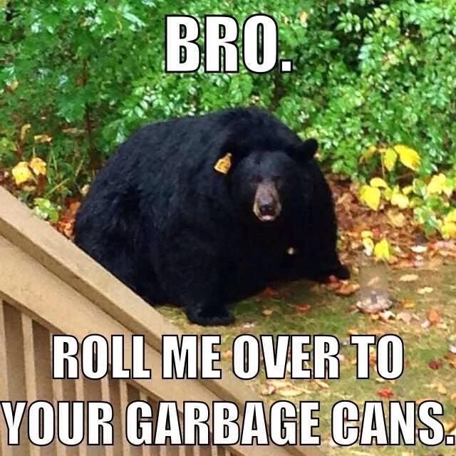 jolly bear memes