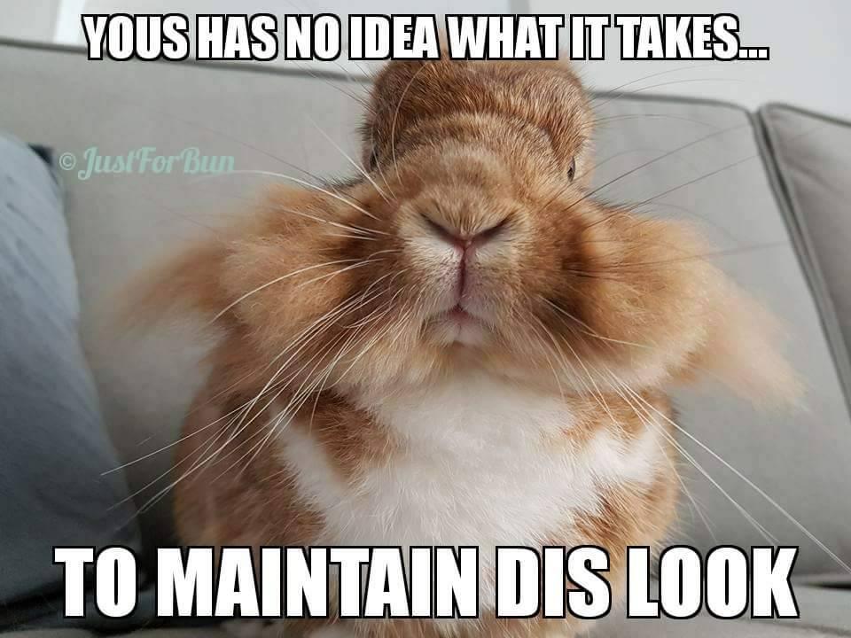 jolly bunny memes
