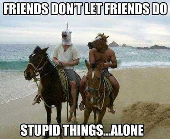 jolly horse memes