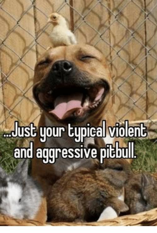 jolly pitbull memes