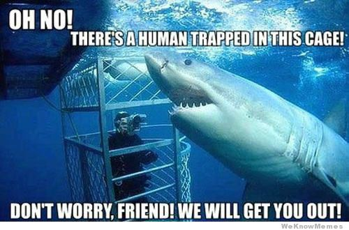 jolly shark meme
