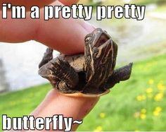 jolly turtle meme