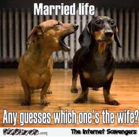 jolly wife memes
