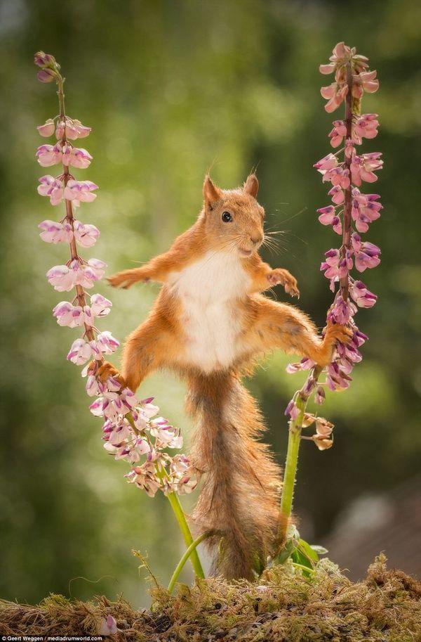 laughable squirrel meme