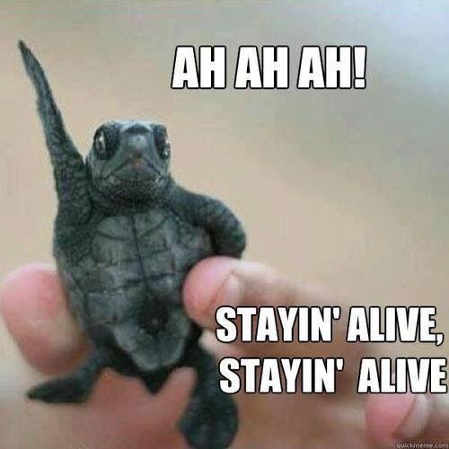 laughable turtle meme