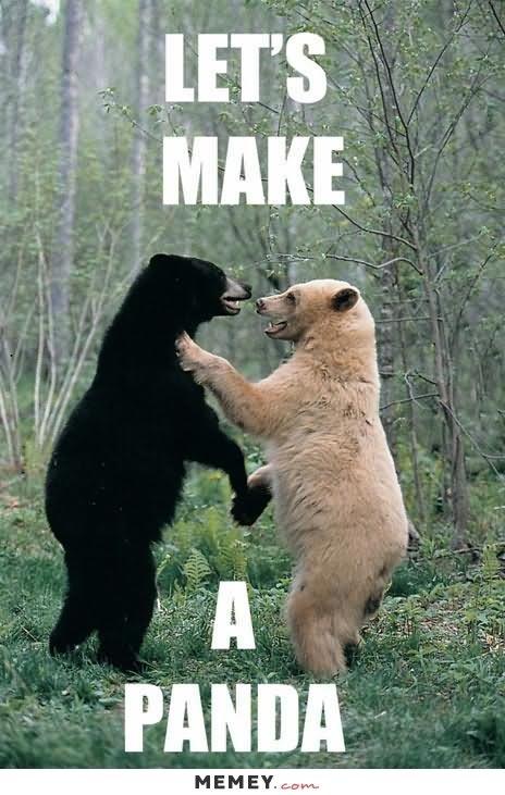 lively bear memes