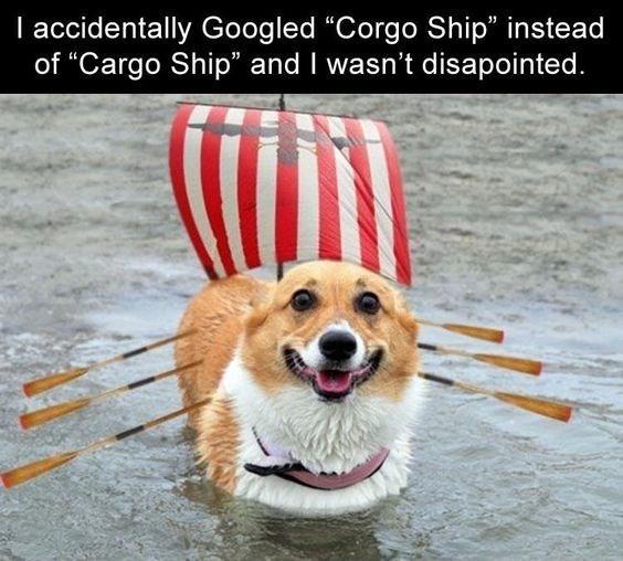 lively corgi memes