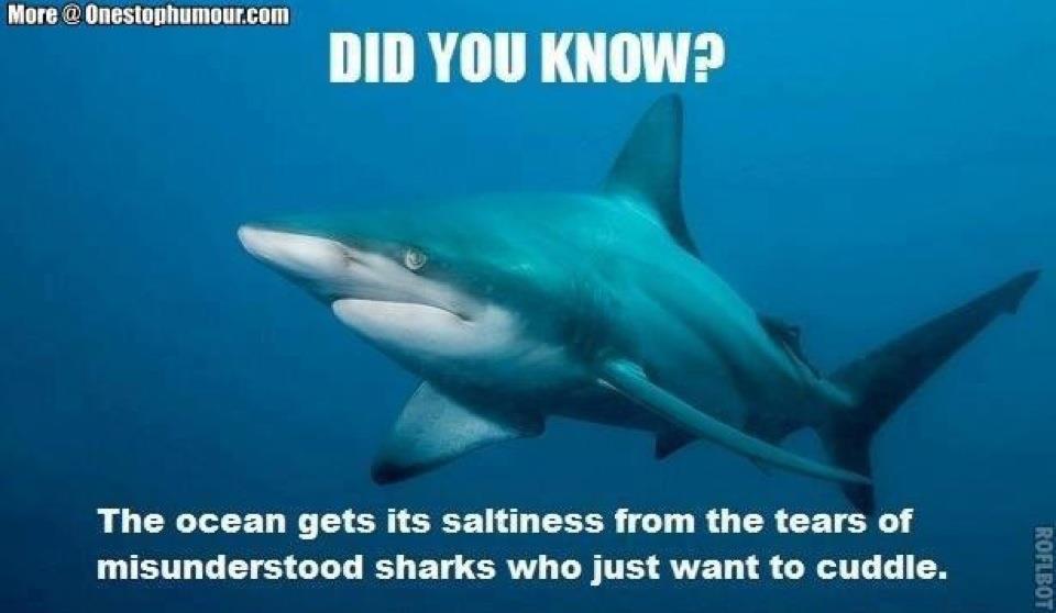 lively shark meme