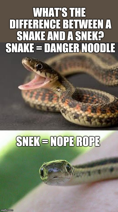 lively snek memes