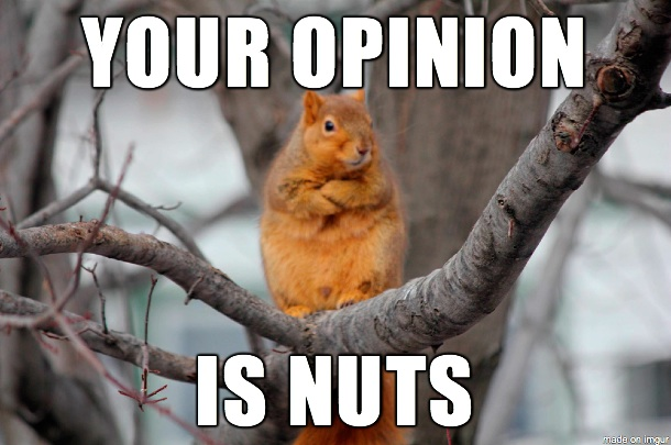 lively squirrel meme
