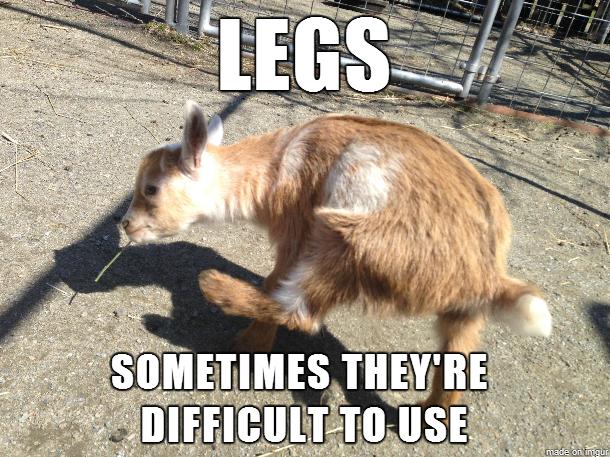 rib tickling goat meme