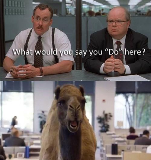 rib-tickling office space meme