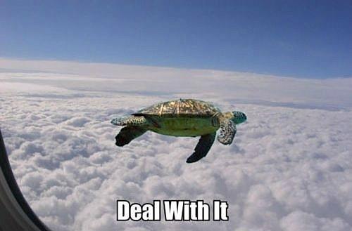 rib-tickling turtle meme