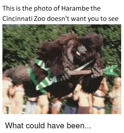 sparkling Harambe the Gorilla memes
