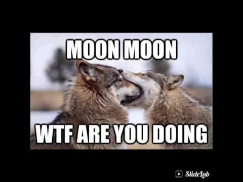 sparkling Moon Moon memes