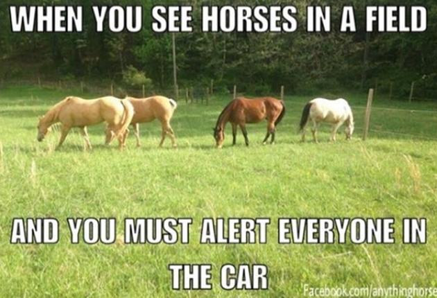 sparkling horse memes