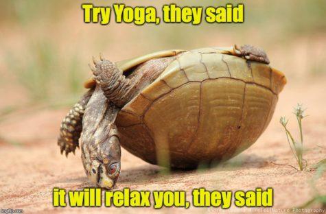 turtle meme (1)