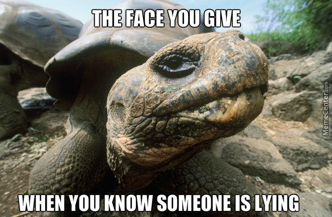 turtle meme (2)