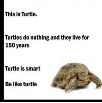 turtle meme (3)