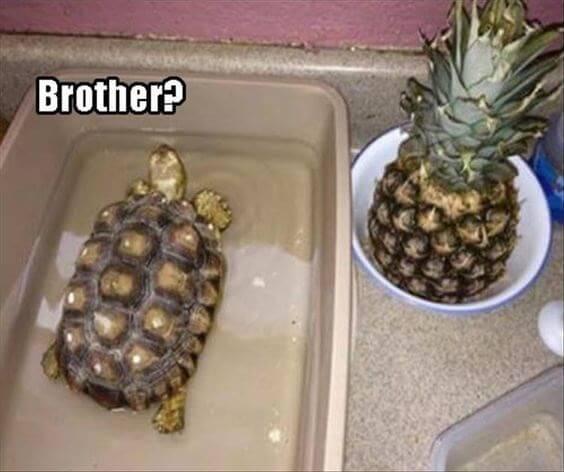 turtle meme (4)