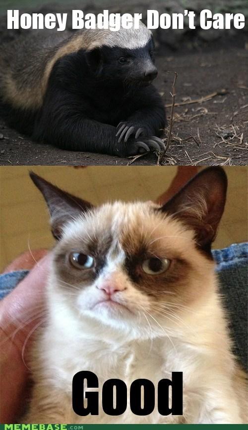 Funny Honey Badger memes