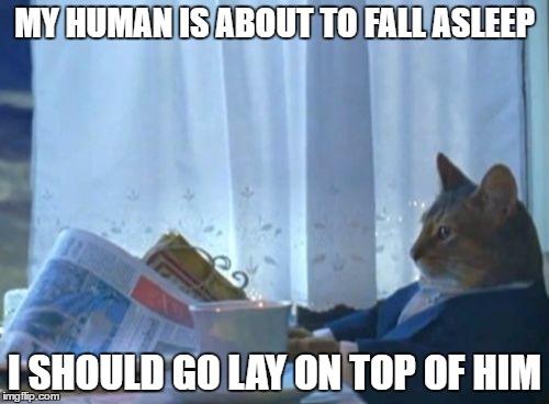 Funny I Should Buy a Boat Cat memes