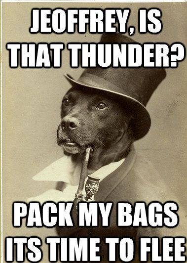 Hilarious pet memes