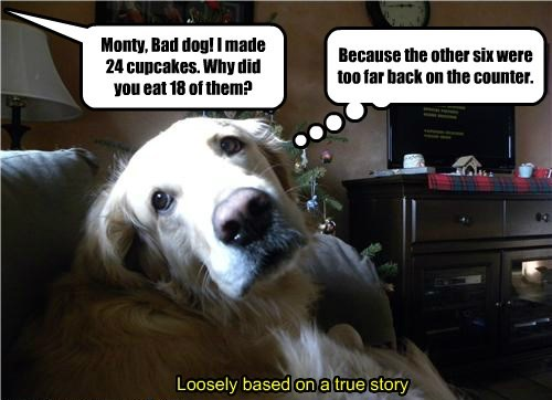 amusing Cupcakes memes