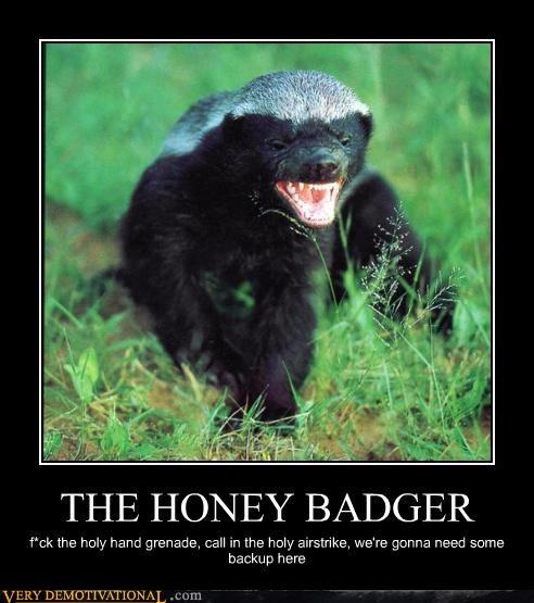 amusing Honey Badger memes