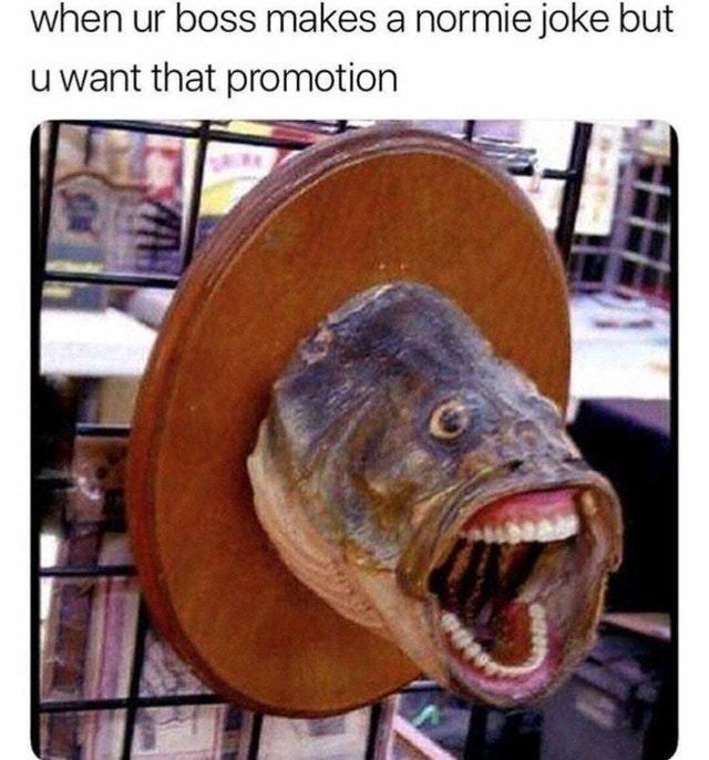 amusing Job memes