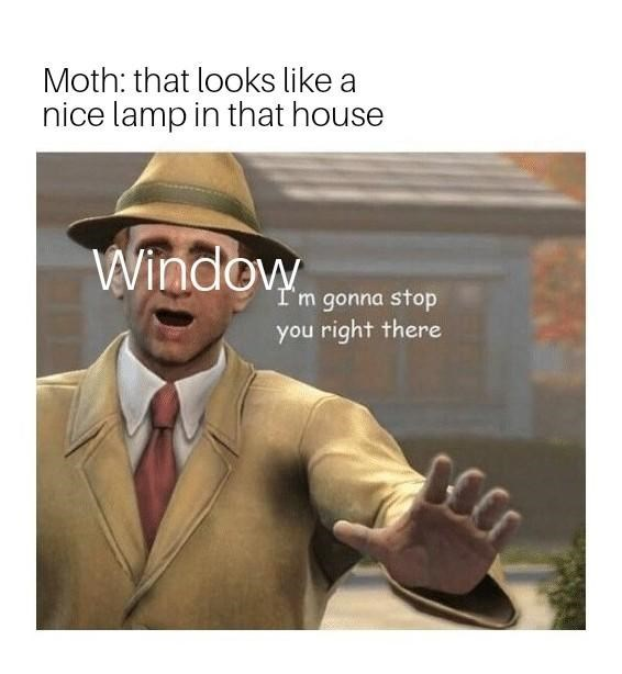 amusing Moth Lamp memes