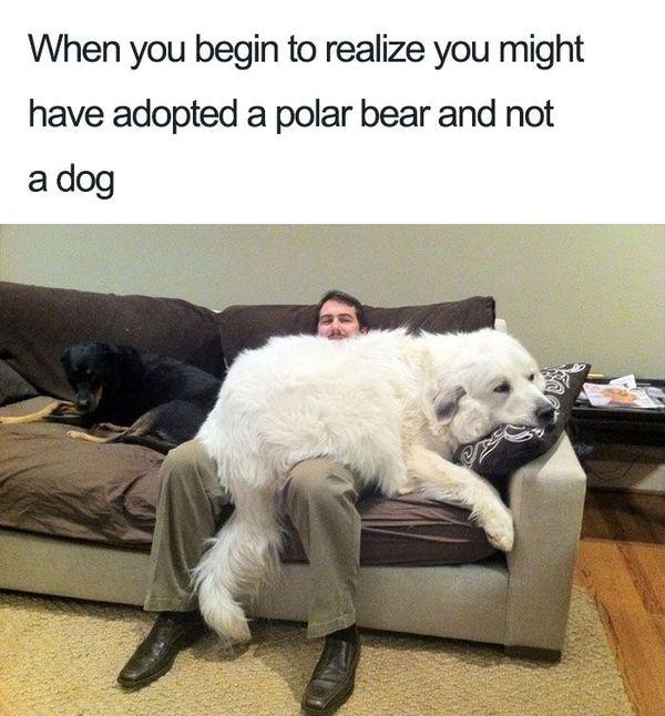 amusing pet memes