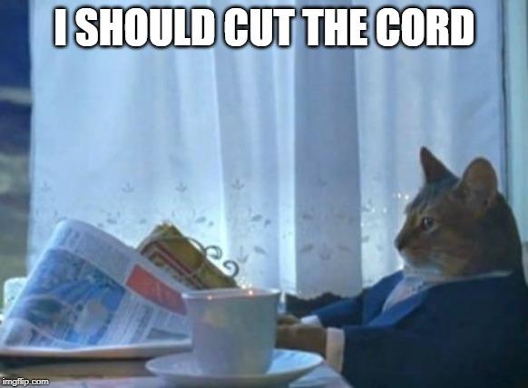 animated I Should Buy a Boat Cat memes