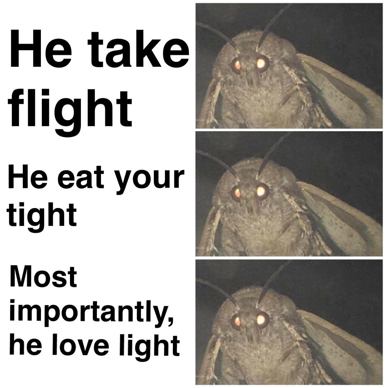 animated Moth Lamp memes
