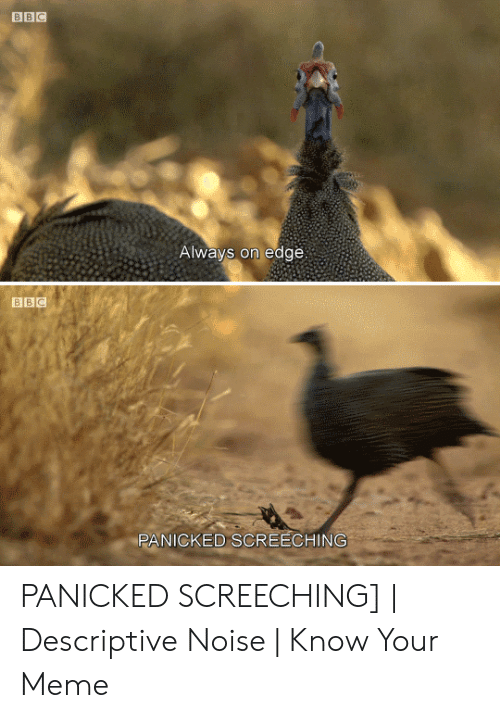 cheerful Descriptive Noise memes