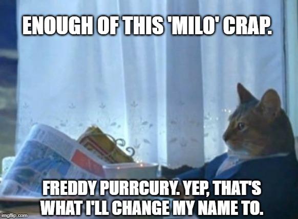 cheerful I Should Buy a Boat Cat memes