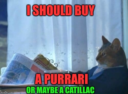 chucklesome I Should Buy a Boat Cat memes