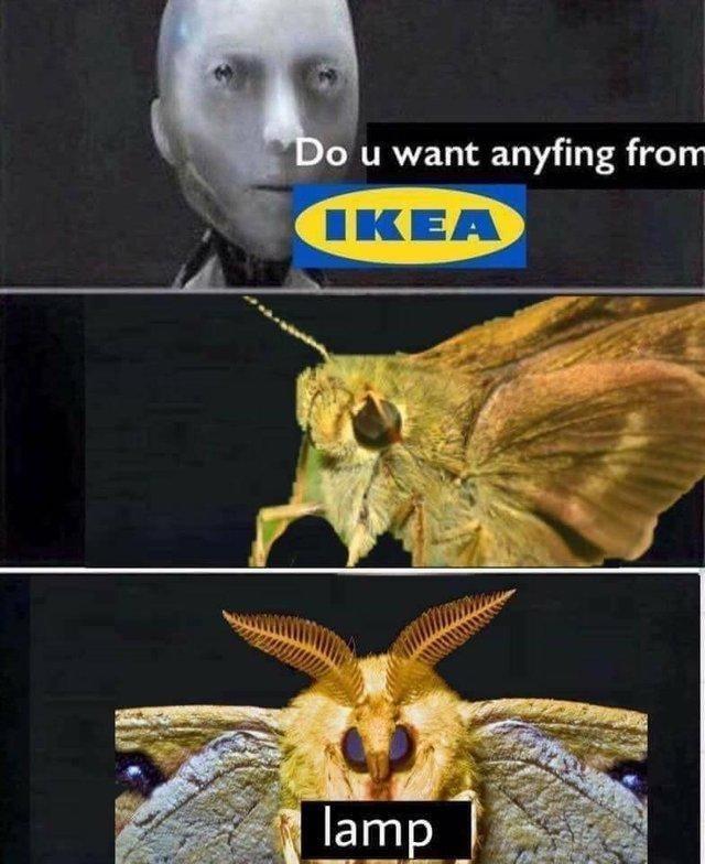 comic Moth Lamp memes