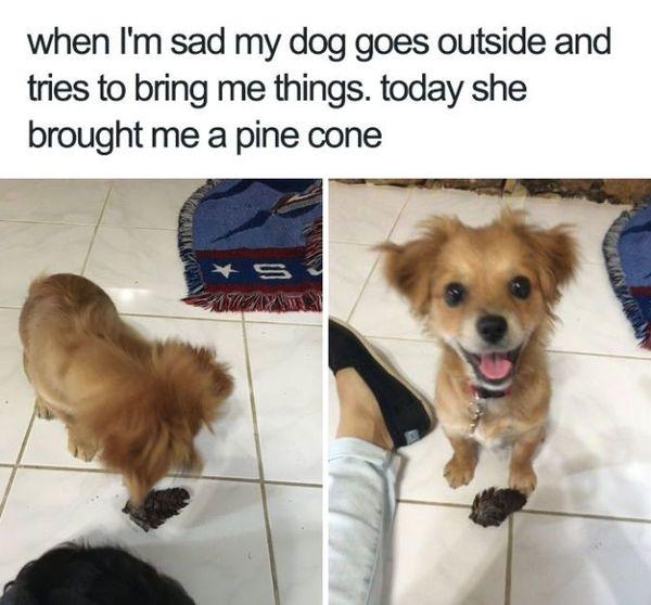 comic pet memes
