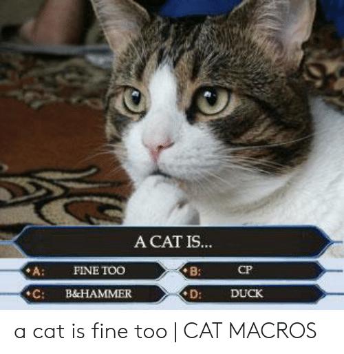 comical A Cat Is Fine Too memes