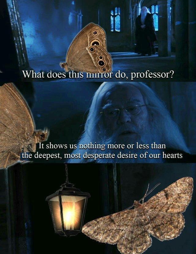 comical Moth Lamp memes