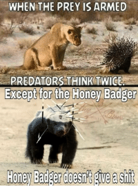 entertaining Honey Badger memes