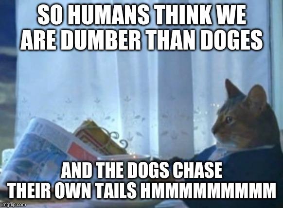 high-spirited I Should Buy a Boat Cat memes