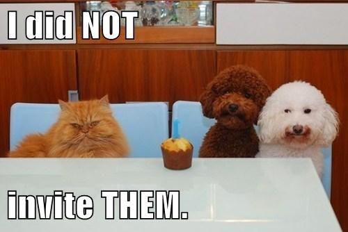 humorous Cupcakes memes