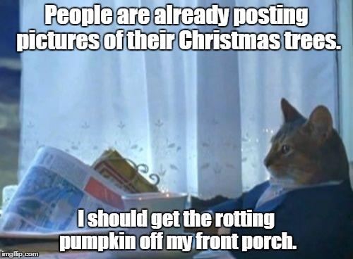 humorous I Should Buy a Boat Cat memes