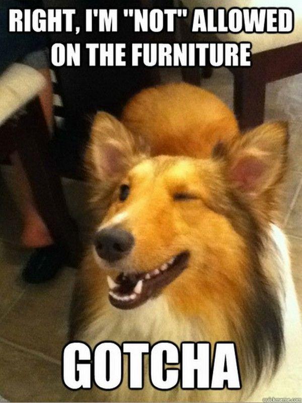 humorous pet memes